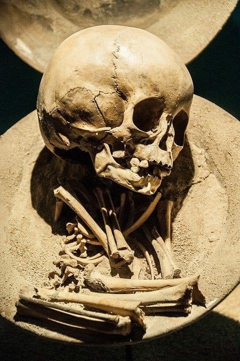 Finding Human Ancestors and Shifting Perspectives